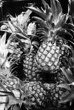 Pineapples. Set of many pineapples in black and white stock image