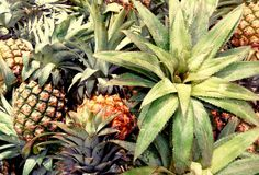 Pineapple. S in the small market stock photography
