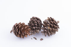 Pineapples. Three pine cones on a white background Stock Photos