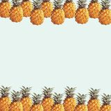 A pineapples Royalty Free Stock Image