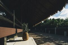 Pineapples under cabana