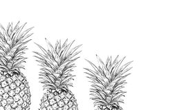 Pineapples on a white background for printing. Royalty Free Stock Images