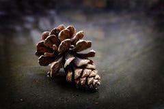 Pinecone杉木锥体在水反射原野 库存图片