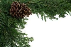 pinecone граници декоративное Стоковая Фотография RF
