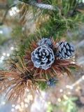 Pinecone на первом снеге красивом стоковое фото