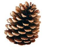 Pinecone 1 Imagen de archivo