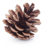 Pinecone Photo stock