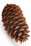 pinecone Fotografia Stock
