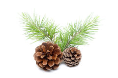Pinecone isolated on white background Royalty Free Stock Image