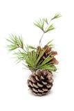 Pinecone isolated on white background Stock Photo