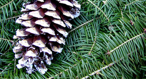 Pinecone. This is a pine cone on a decorative wreath royalty free stock images