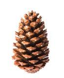 Pinecone Royalty Free Stock Image