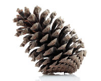 Pinecone Royalty Free Stock Photos