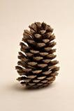 Pinecone Immagini Stock Libere da Diritti