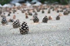 pinecone Arkivbilder