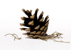 Pinecone. Closeup on white background Stock Images