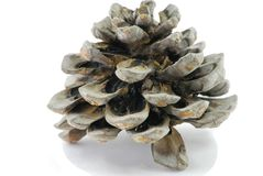 Pinecone Image stock