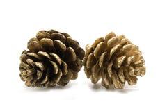 金黄pinecone 库存照片