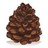 Pinecone vector illustration