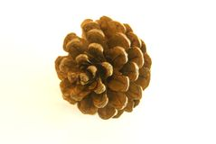 Pinecone Stock Photography