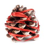 Pinecone Royalty Free Stock Image