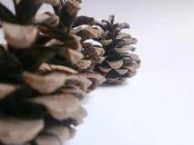 Pinecone Foto de Stock Royalty Free