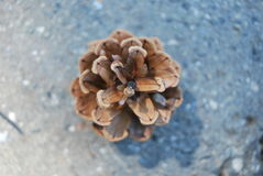 Pinecone photos stock