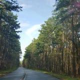 Pinecone-Abenteuer Stockbild