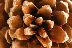 Pinecone from above Stock Image