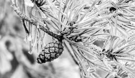 Pinecone-Baum auf Schnee Lizenzfreies Stockbild