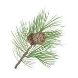 Pinecone branch Collection Royalty Free Stock Image