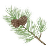 Pinecone branch Collection. Pine tree branch isolated on white background. forest christmas set. Pine cone Collection Royalty Free Stock Photo