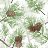 Pinecone branch seamless background. Pine tree branch seamless background. forest seamless pattern. Pine cone Collection. forest christmas set. Pine cone Royalty Free Stock Photography