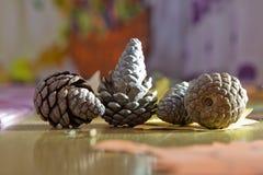 Pinecone caido en el piso Cono del pino con la rama caida en la tierra cono caido del pino que se sienta en la cama del pino inne Imágenes de archivo libres de regalías