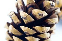 Pinecone - cercano Fotografía de archivo libre de regalías