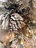 Pinecone coberto de neve Imagens de Stock