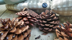 Pinecone and the cushion Stock Photography