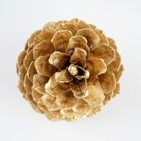 Pinecone d'or Décoration d'or de Noël D'isolement sur le fond blanc photos stock