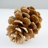 Pinecone d'or Décoration d'or de Noël D'isolement sur le fond blanc images stock