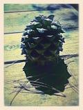 Pinecone Royalty Free Stock Photo