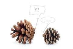 Pinecone Dialogue isolated on white background royalty free stock images
