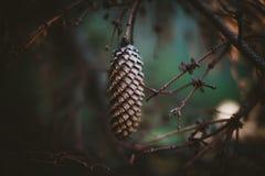 Pinecone diep in het bos stock afbeelding
