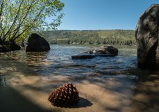Pinecone, Donner Lake shoreline. Shoreline details, Donner Lake in the  northern Sierra Nevada range, California Royalty Free Stock Images