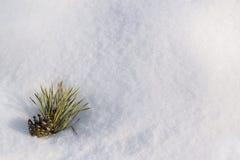 Pinecone in einem Schnee als copyspace Zusammensetzung Lizenzfreies Stockbild