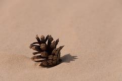 Pinecone en la arena Imágenes de archivo libres de regalías