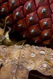 pinecone et lame avec la rosée Photo stock