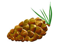 Pinecone fallen Royalty Free Stock Photos