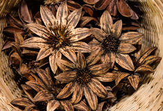 Pinecone flower Stock Photo