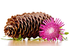 Pinecone, flower and leaves Stock Photo