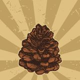 Pinecone on grunge royalty free illustration
